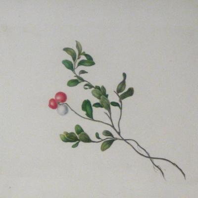 """Wintergreen"" (Red Berries)"
